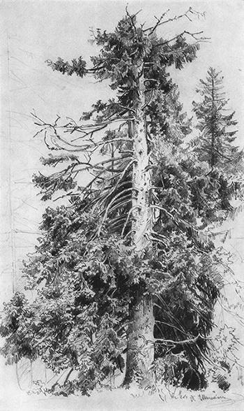 Как нарисовать дерево, если Вы не умеете изображать даже листик